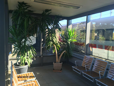 Große Palmen stoßen im Warteraum-Glaskasten am Bahnsteig an die Decke des Raumes