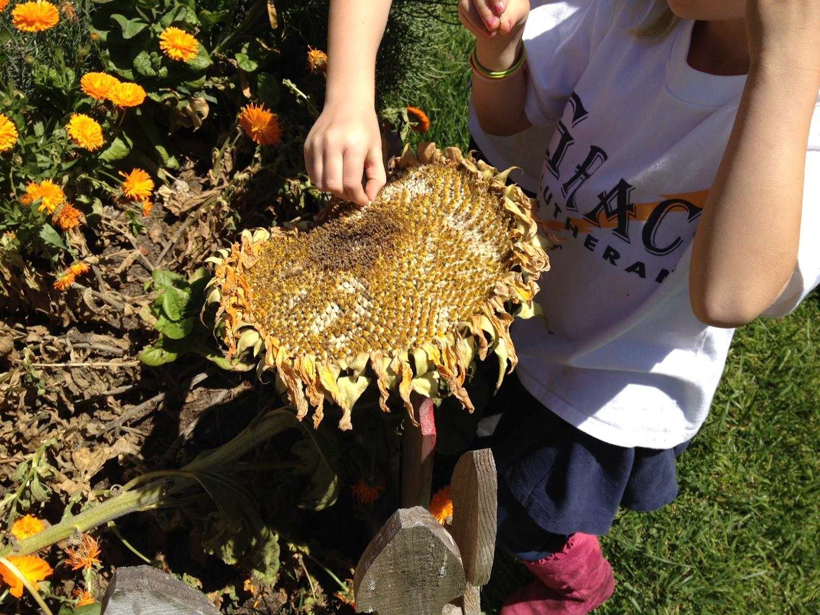 Sunflower Seed Math Adding