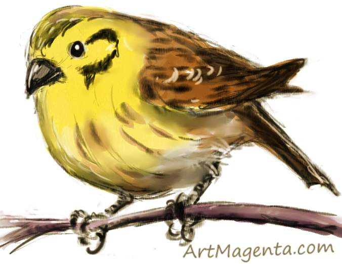 yellowhammer bird coloring pages - photo #38