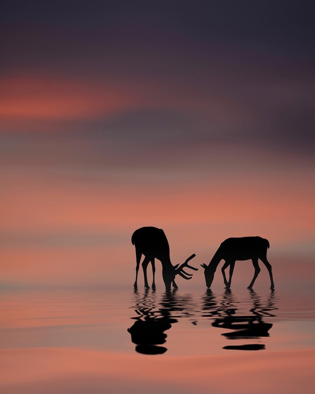 09-Deer-Dominic-Liam-Beautifully-Manipulated-Pictures-at-Sunrise-www-designstack-co