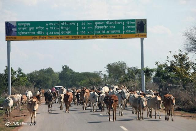 "تشاتيسغاره ""Chhattisgarh"" ، الهند"