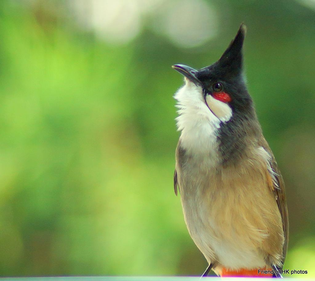 Photographic Wildlife Stories In UK/Hong Kong: Birds In