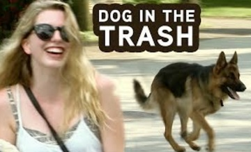 Funny Video – Dog Hops In GARBAGE Truck Prank