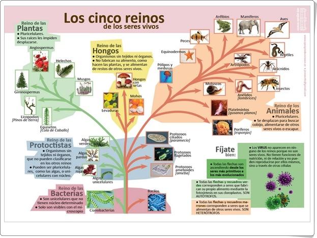"""""""Los cinco reinos de los seres vivos"""" (Infografía de Ciencias Naturales)"""