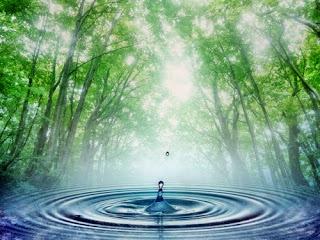 Resultado de imagem para FLORESTAS e agua