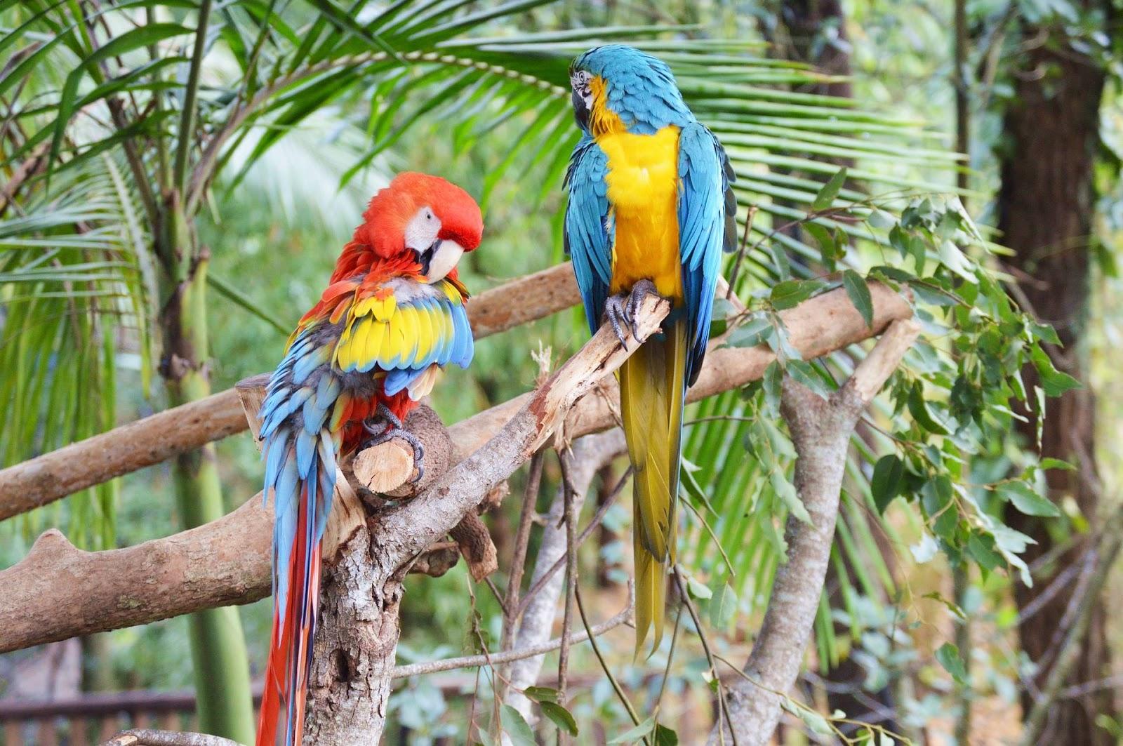 澳洲-昆士蘭-布里斯本-黃金海岸-動物園-澳洲動物園-推薦-必玩-必去-自由行-景點-旅遊-Australia-Zoo