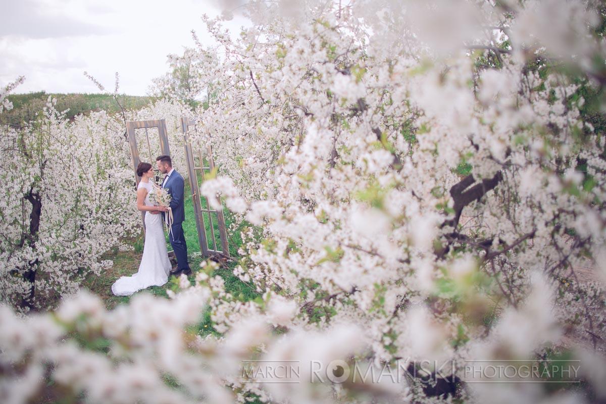 Wiosenna sesja ślubna w wiśniowym sadzie.