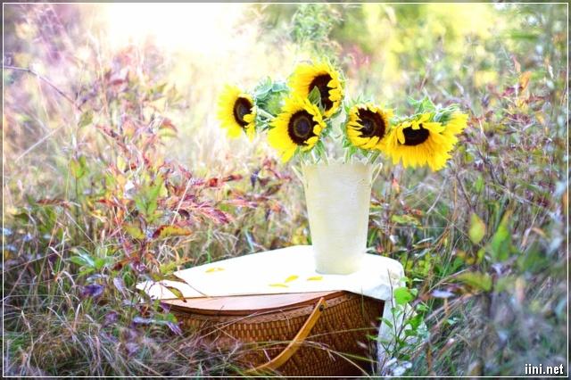ảnh hoa cỏ đẹp