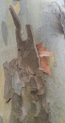 árbol, hoja, Marieta Pancheva, blogger