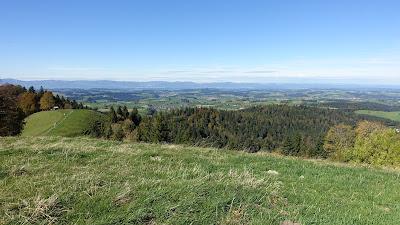 Ahorn mit Blick Richtung Jura und Mittelland
