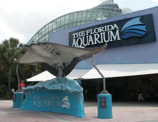 countdown 10 florida aquarium tampa fl review to come soon visit in