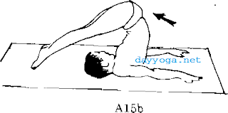tu-the-cai-cay-A15-halasana