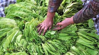 На вниманието на кандидатите за подпомагане по Схемите за директните плащания на площ и за национални доплащания за тютюн необвързани с производството