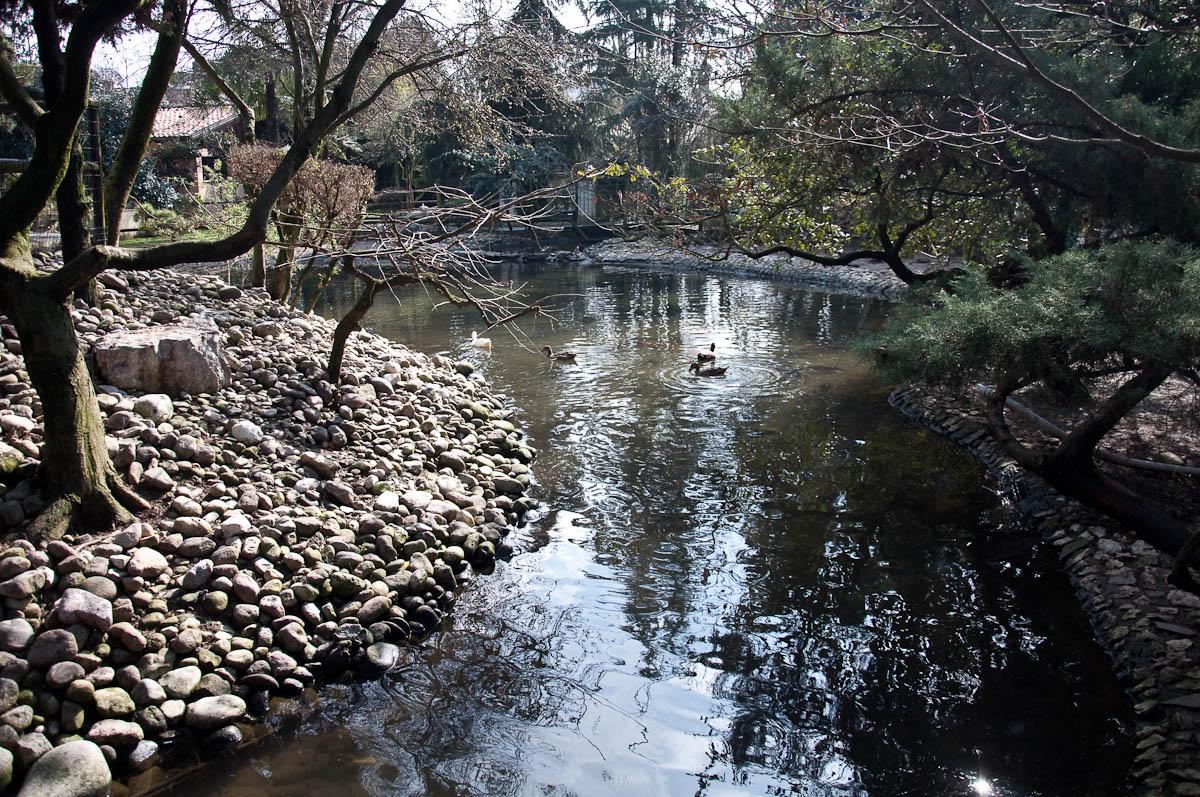 The duck pond, Parco Faunistico Cappeller, Nove, Veneto, Italy