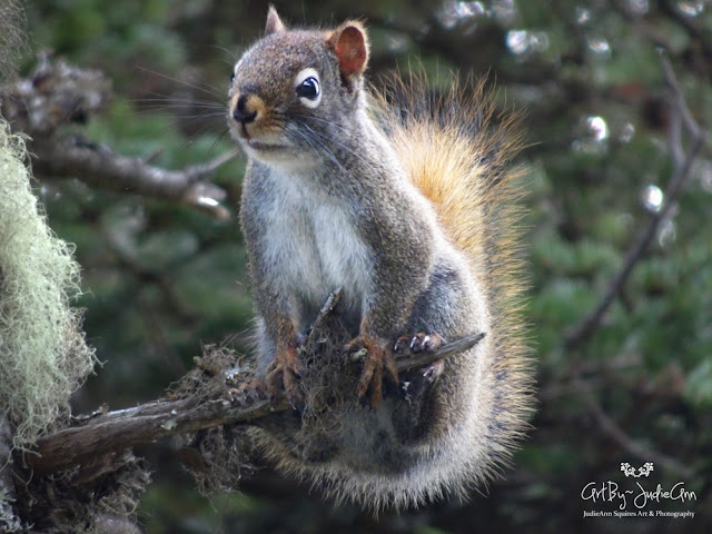 Newfoundland Squirrel