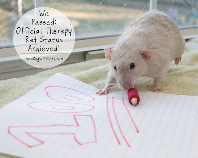 We Passed: Official Therapy Rat Status Achieved!