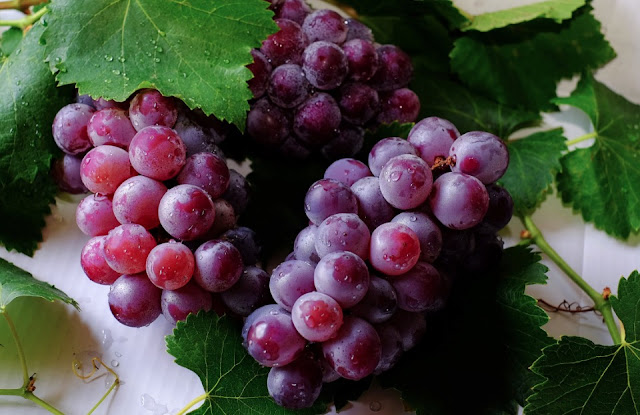 How To Grow Grape