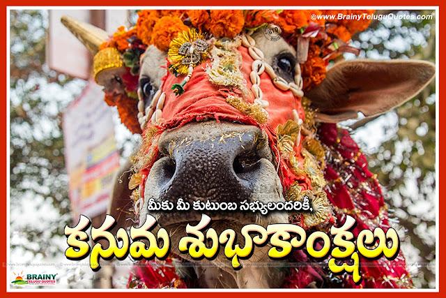 Kanuma wishes Quotes in Telugu, Telugu kanuma Greetings, best kanuma telugu greetings