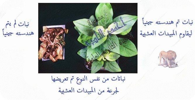أحياء الثانوية  العامة - تقنيات التكنولوجيا الجزيئية ( الهندسة الوراثية ) - تقنية DNA  معاد الإتحاد  - الزراعة – مقاومة الحشرات