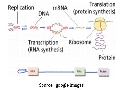 Sintesis protein pada susu formula 4 langkah langkah sintesis protein ccuart Images