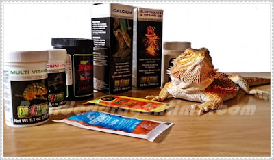 bearded dragon vitamins and supplements