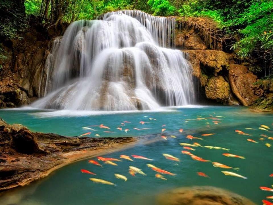 Cute Beautiful Nature Images