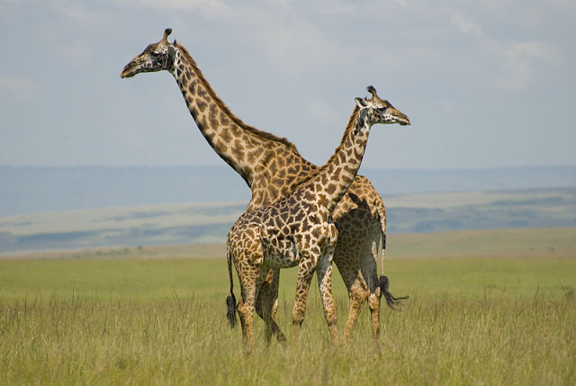 5 Kenya Parks and Reserves You Need to Visit in 2018