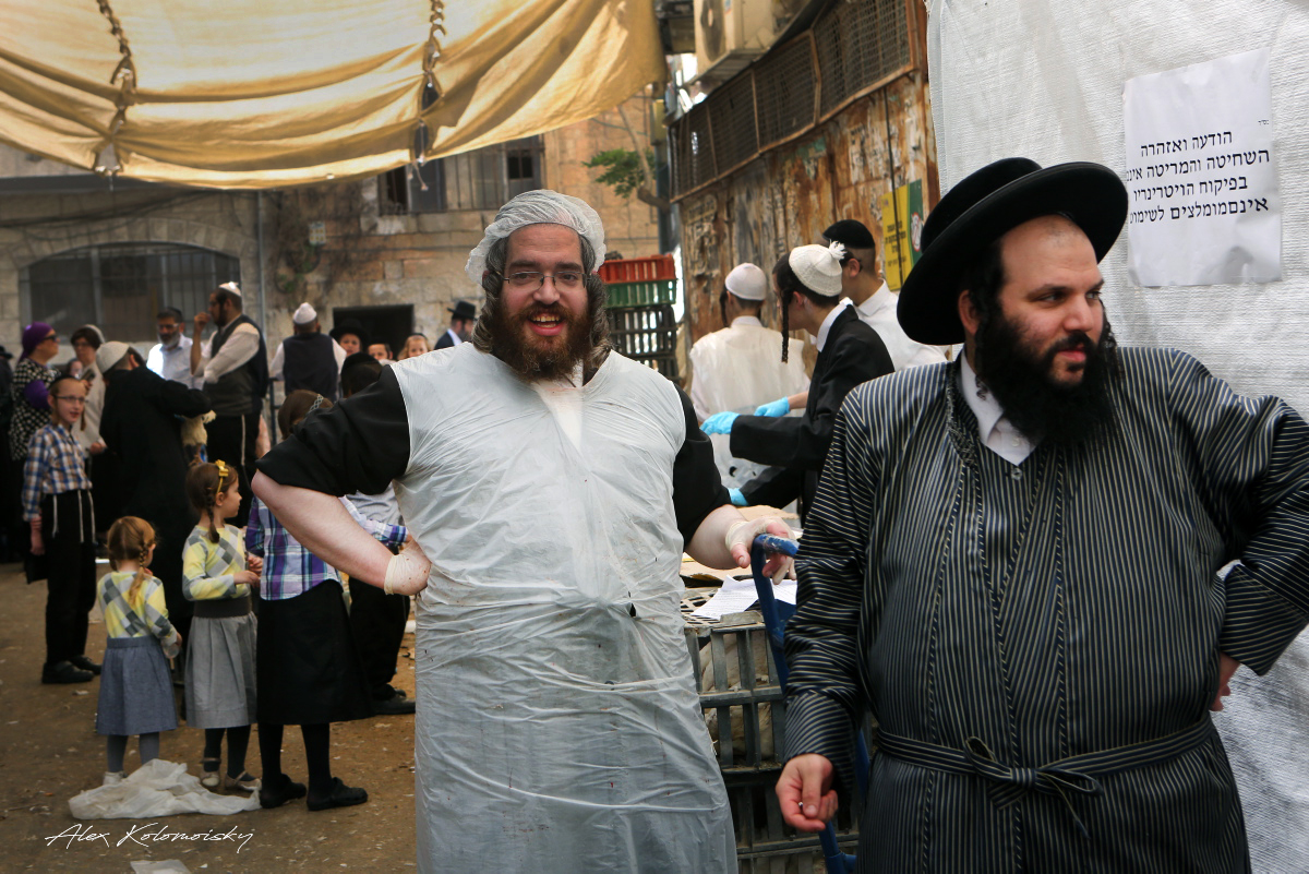 holy jew Jews and jew hate: sense and nonsense about jews, judaism, zionism, anti-semitism, anti-zionism, the talmud, hesronot shas the khazars and anti-semitism.