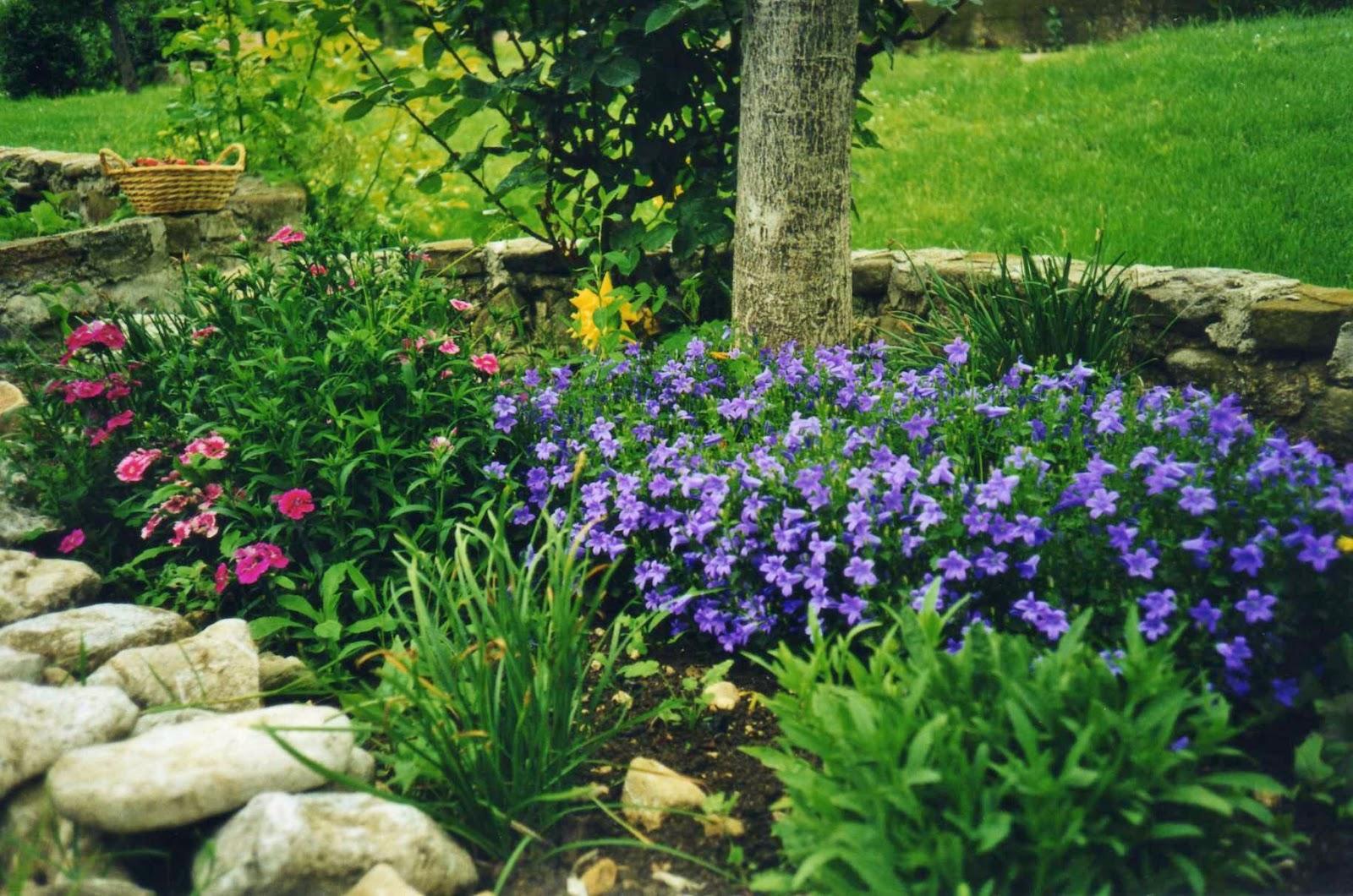 LA GRANJA DI ADRIANA: fiori e piante in giardino e in casa