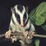 oposum layang
