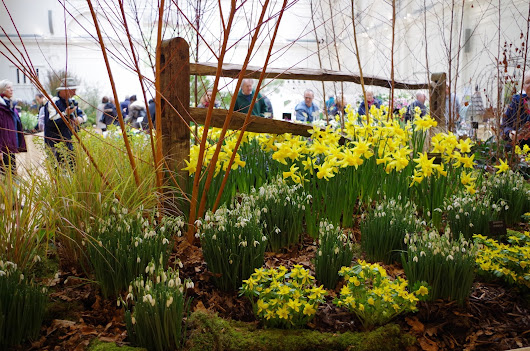 RHS Early Spring Plant Fair 2016
