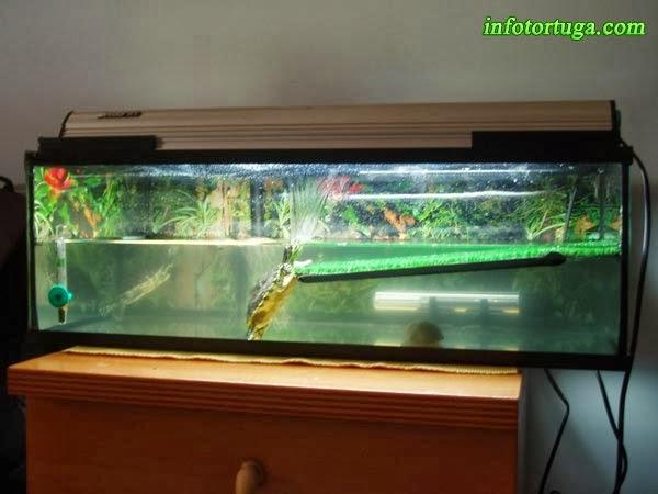 ejemplo de rampa demasiado horizontal a las tortugas les es difcil subir y no queda una zona totalmente seca foto cedida por enrique velasco