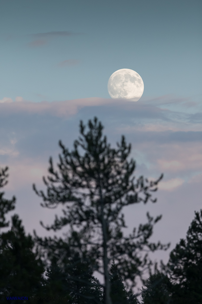 Luna llena en Yellowstone