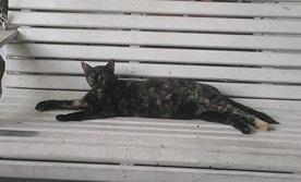 sweetie cat