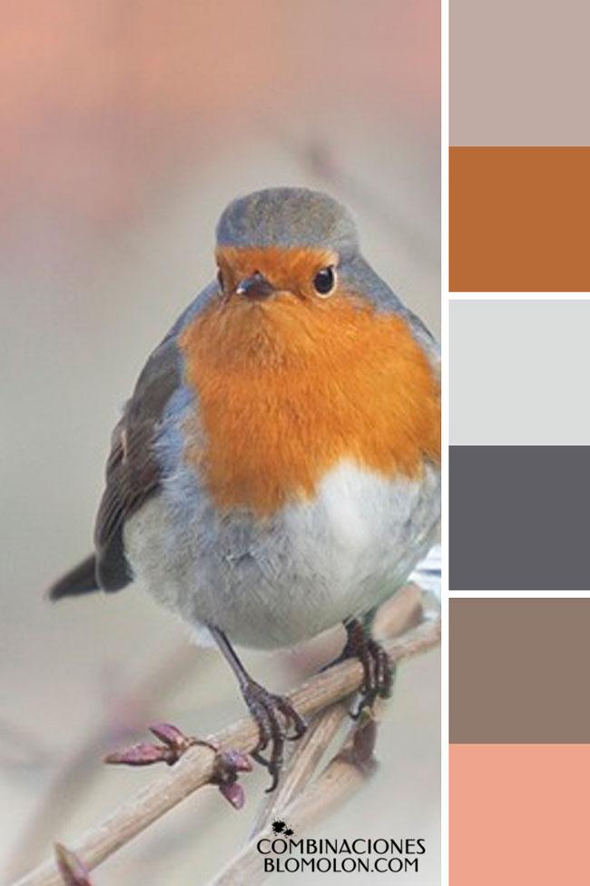 combinacion_de_colores_variedad_de_temporada_7