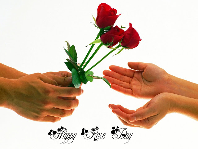 Happy Rose Day 2017 Image and Wallpaper