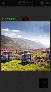 На большой поляне расположилась пасека, стоят домики для пчел