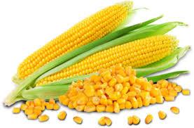 corn,maize(makai) health benefits in urdu