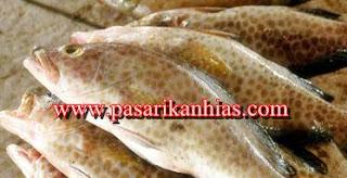 Harga Jual Ikan Kerapu Di Pasaran