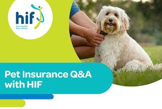 Pet Insurance: What You Necessity to Tell