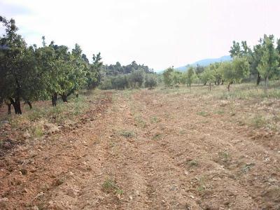 La pileta, camino, pantano de Pena, embalse, finca, almendros, olivos 33