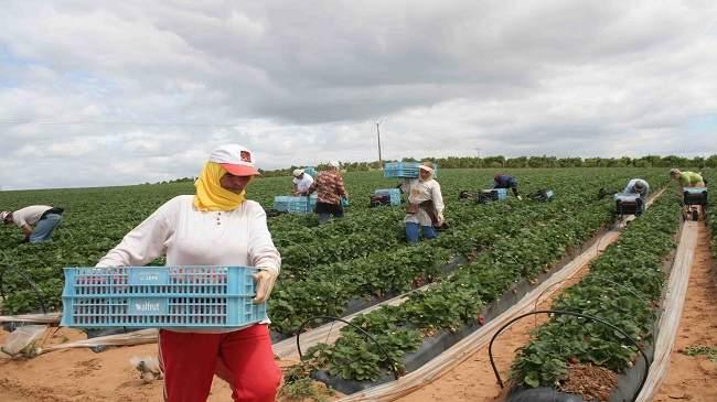 الجهوية 24 - الأمن الغذائي للمغاربة في خطر..الأراضي الزراعية لن تعود كما كانت في هذا التاريخ