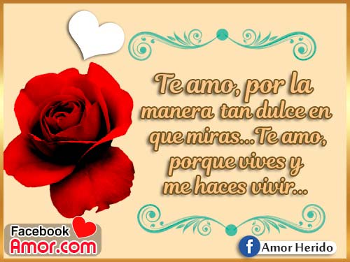 te amo rosa roja