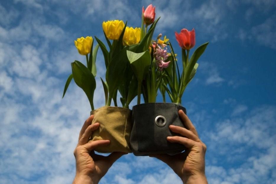 How to Grow Tulips in Pots