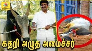 Tamilnadu Minister Vijaya Baskar's Bull Dies during Jallikattu