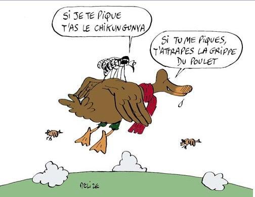 dessin humoristique moustique sur canard chikungunya grippe poulet