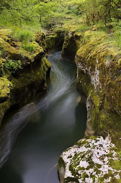 Dark water and springtime greenery