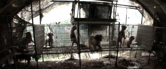 Granja de perros en Corea del Sur