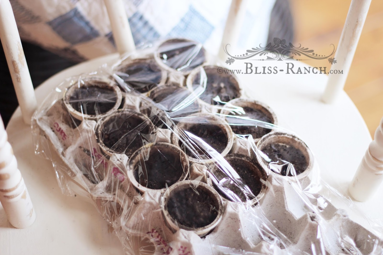 Starting Seeds in Disposable Coffee cups, Bliss-Ranch.com