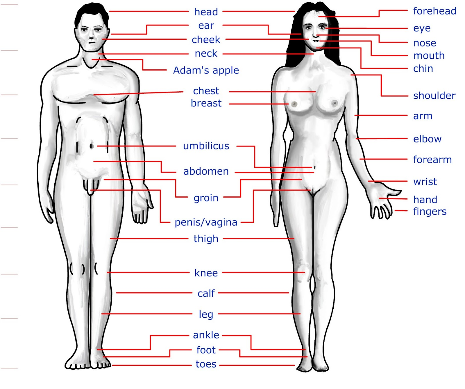 Human Body Secret The Human Body Parts